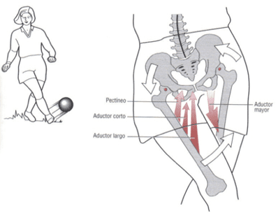neuman 2007 aductores, tratamiento pubalgia en futbol acción de aductores