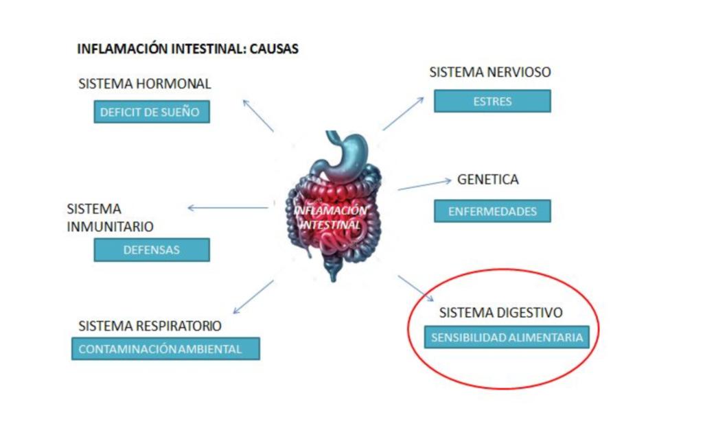 Inflamación intestinal y su relación con la nutrición y el rendimiento deportivo